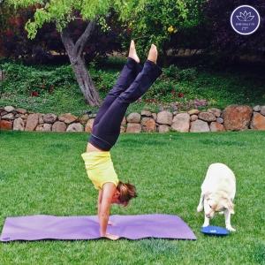 day15-handstand