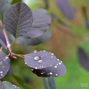 day4-raindrops-ig